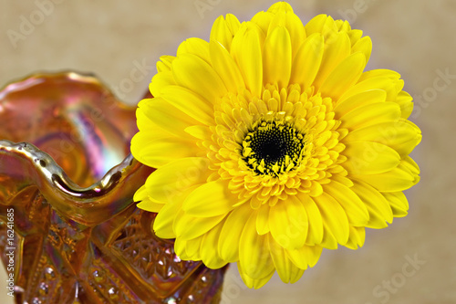 Yellow Daisy In Orange And Gold Carnival Glass Vase Buy This Stock