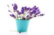 lavender in blue flower pot