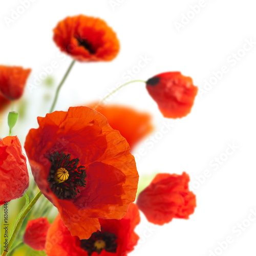 Foto op Plexiglas Rood floral design, decoration flowers, poppies border - corner