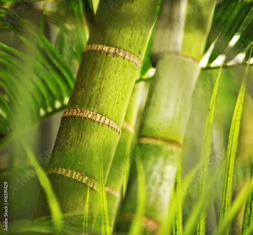 zielona-roslina-zblizenie