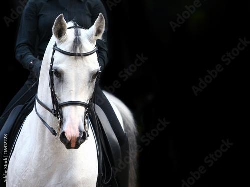 Foto op Canvas Paarden rider on white arab