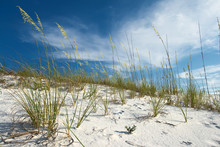 Sand Dune And Grasses Under Pretty Blue Sky