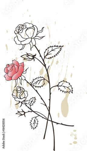 Fototapety, obrazy: roses