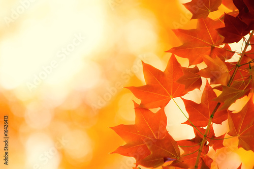 autumn leaves, very shallow focus - 16426413