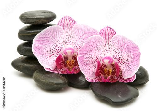 Doppelrollo mit Motiv - pink orchid, stack of stones (von Andre)