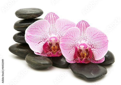 Plissee mit Motiv - pink orchid, stack of stones