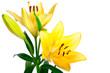 Leinwandbild Motiv lillie, blume