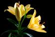 canvas print picture lillie, blume