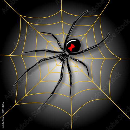Photo  Halloween Spider