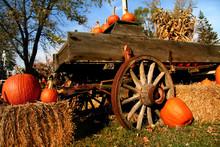 Pumpkin Arrangement For Sale