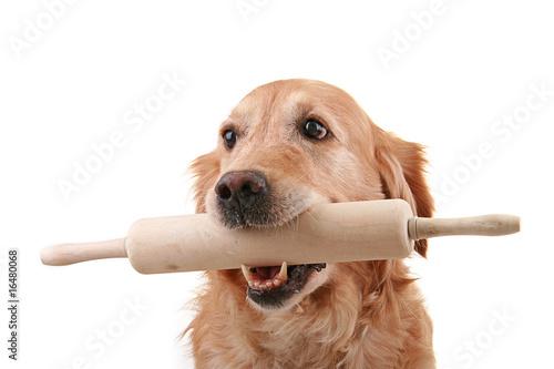 Foto patisserie, chien pâtissier, golden retriever