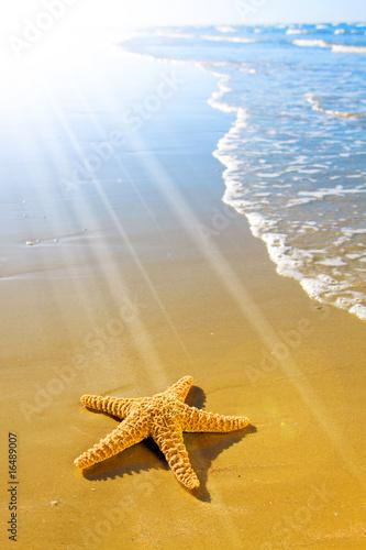 Fotografie, Obraz  Sea Star or Starfish on a beautiful beach