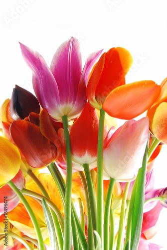 Foto-Schiebegardine ohne Schienensystem - Tulips
