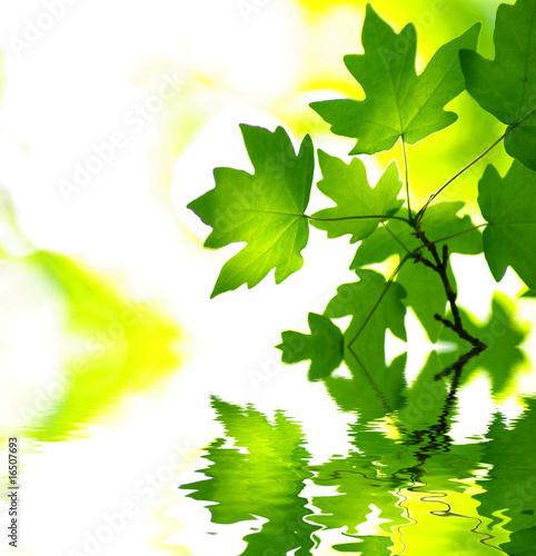 Foto-Schiebegardine ohne Schienensystem - green leaves