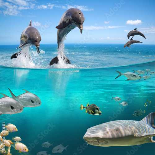 Foto op Plexiglas Dolfijn AQUA LIFE