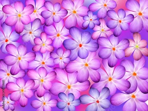 Foto-Duschvorhang - Hintergrund Krokusblüten