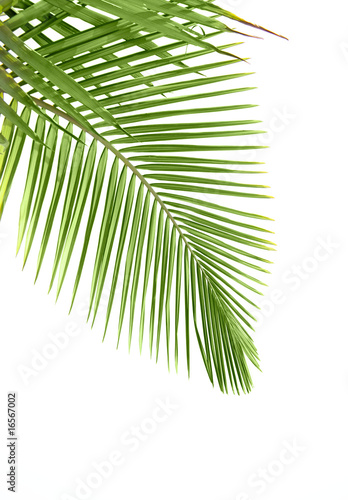 Foto-Duschvorhang - Leaves of palm tree