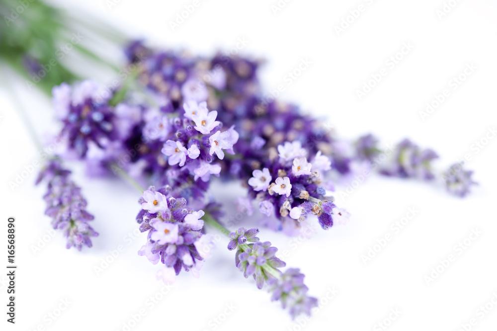 Fototapety, obrazy: Kwiaty lawendy