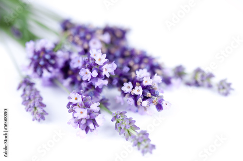 Photo Stands Lavender Fleurs de lavande
