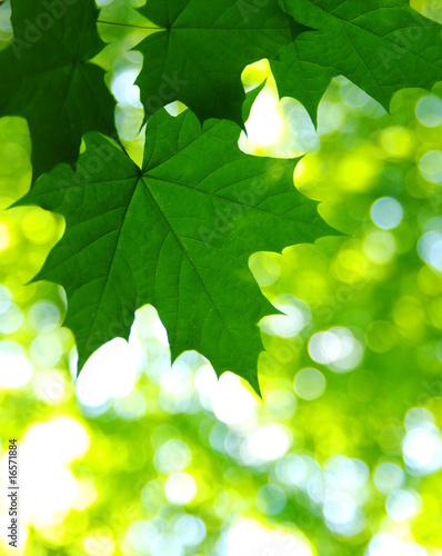 Foto-Lamellen - leaves (von Alekss)