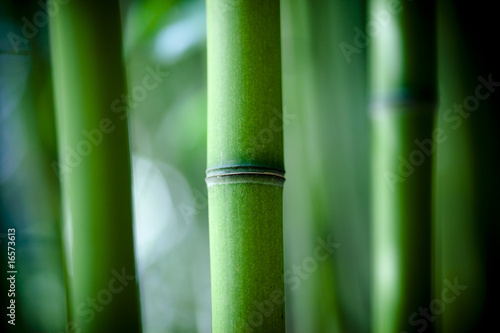 In de dag Bamboo Bambou zen