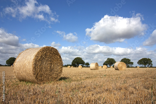 Fotografie, Obraz harvest in summer