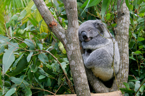 Door stickers Koala Schlaf schön!
