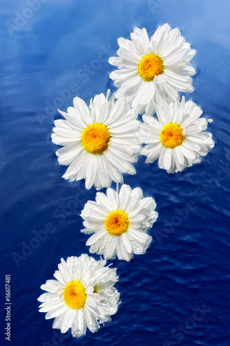 Doppelrollo mit Motiv - Flowers and Water (von styf)