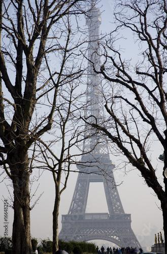 Fototapeta Paryż  wieza-eiffla-w-paryzu-miedzy-drzewami