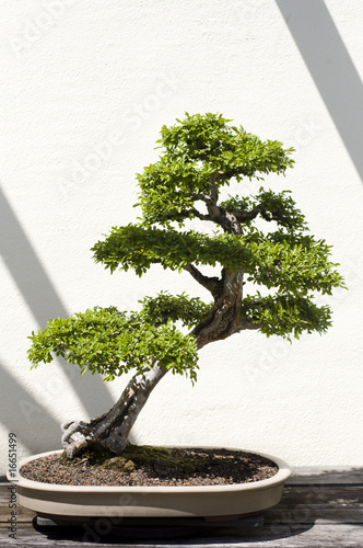 Doppelrollo mit Motiv - Bonsai Tree