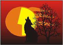 Tiere Der Nacht - Kojote