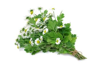 Fototapeta Przyprawy Feverfew (medicinal herb)