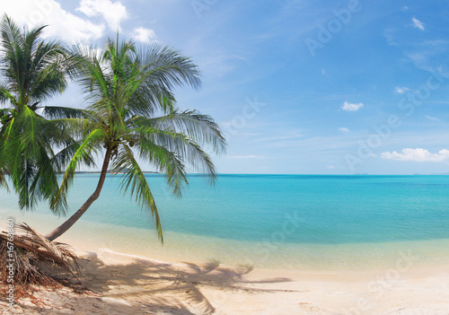 Photo Stands Caribbean tropical beach with coconut palm and sea