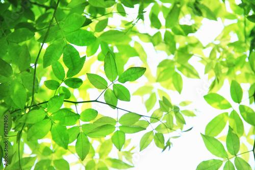 Fotobehang Zwavel geel 新緑