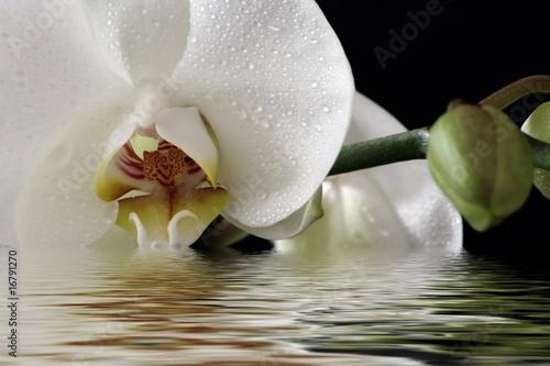 Türaufkleber Orchideen Orchidee beim baden