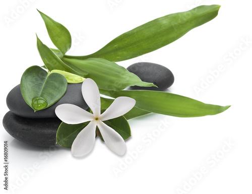 kamienie-z-zielonymi-listkami-i-bialym-kwiatem