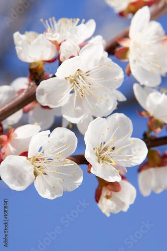 Doppelrollo mit Motiv - spring beauty