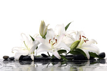Madonna Lilies With Spa Stone ...