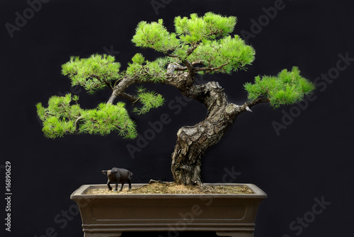 Stickers pour porte Bonsai potted landscape