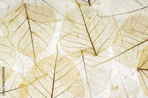 Valokuva  le foglie trasparenti