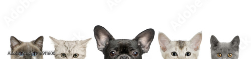 Dog head and cat heads in front of white background