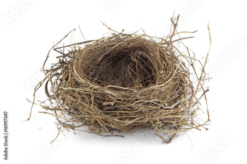 Fototapeta Bird nest obraz