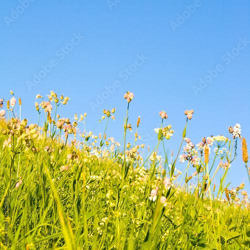 Foto op Plexiglas Landschappen Eine Idyllische Wiese im Sommer