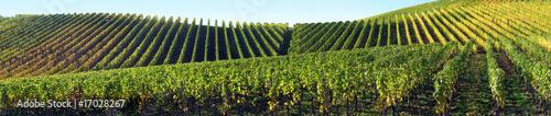 Fotografía  Panorama vignes