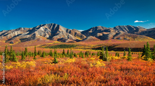 Poster de jardin Rouge traffic Denali National Park in autumn