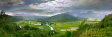 Panorama Of The Taro Fields In Kauai Hawaii