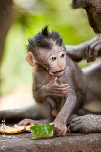 Cute little baby monkey Canvas Print
