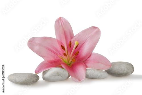 Fototapeta wellness still life pebbles and pink lily obraz na płótnie