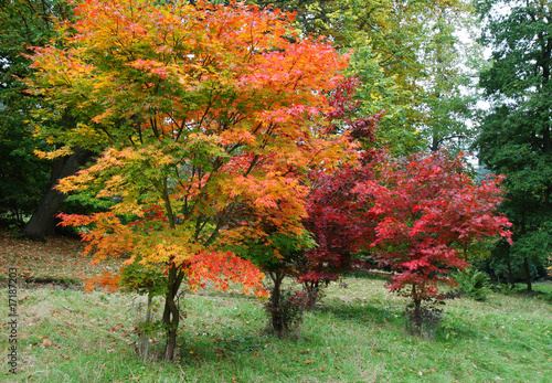 Autumn in an English Wood Canvas Print