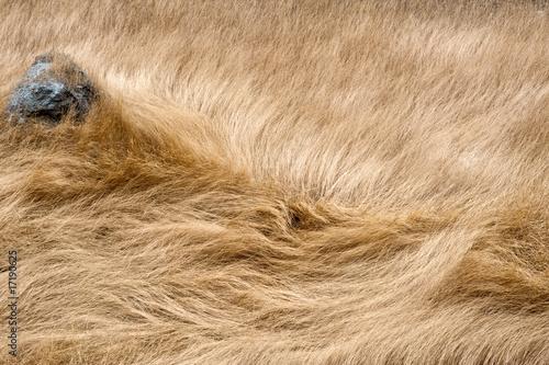 Fototapeta Windswept Grass, Blue Stone